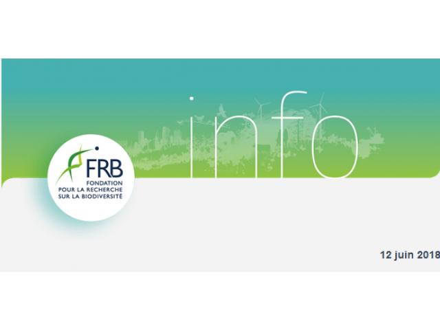 The FRB celebrates its 10th anniversary and launches its first prize, The deadline for applications is approaching!