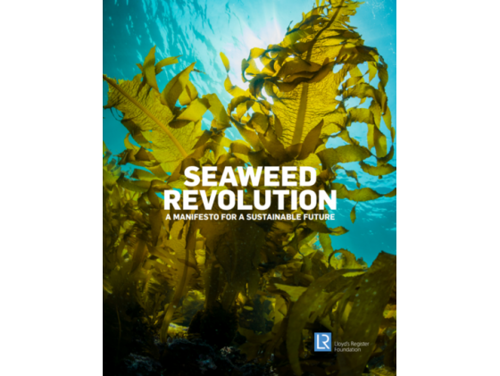 Seaweed Manifesto: Towards implementation